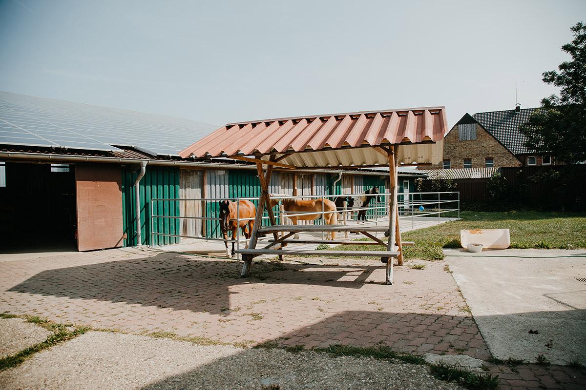Sachkundelehrgang Pferdehaltung und Transport